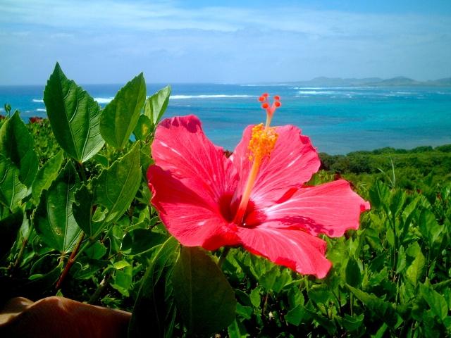 沖縄の気候
