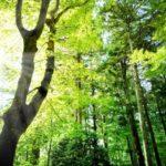 北欧をイメージさせる快適な森林空間