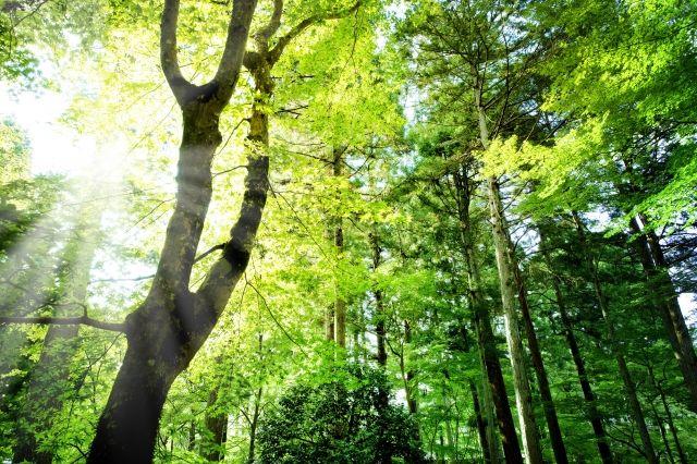 快適な森林空間